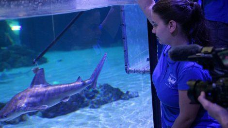 Cara a cara con tiburones en l'Oceanogràfic/CAC