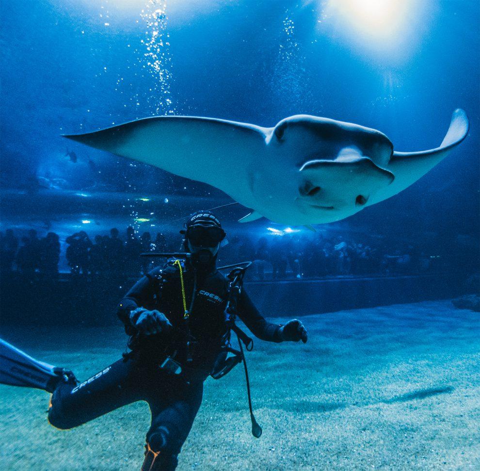Tanque de oceános del Oceanogràfic. Andrea Spinelli/CAC