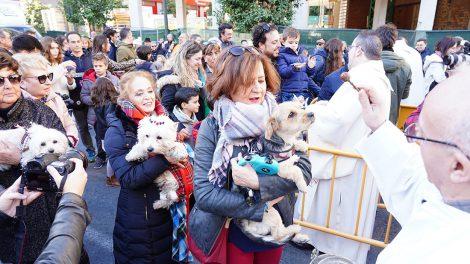 Bendición de animales en la fiesta de San Antonio Abad, en la calle Sagunto de Valencia/Img. Alberto Sáiz